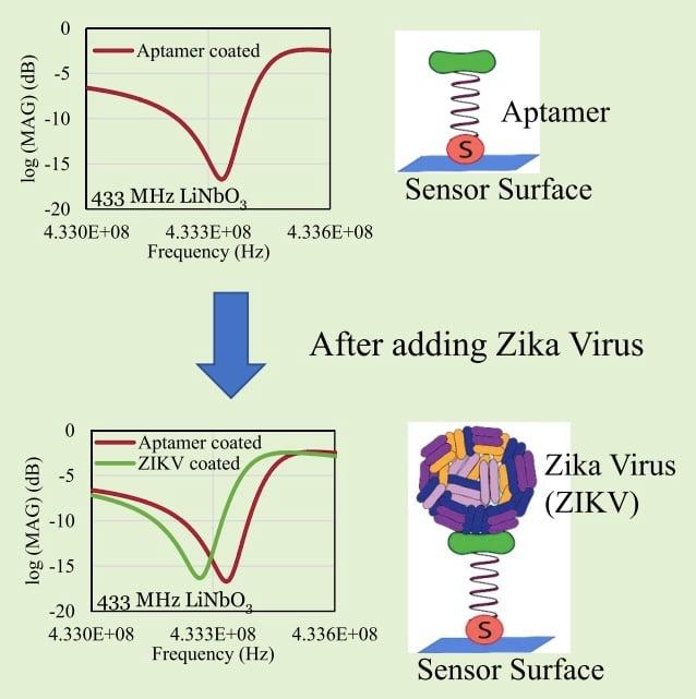 Diagram of how the sensor detecting the Zika virus functions