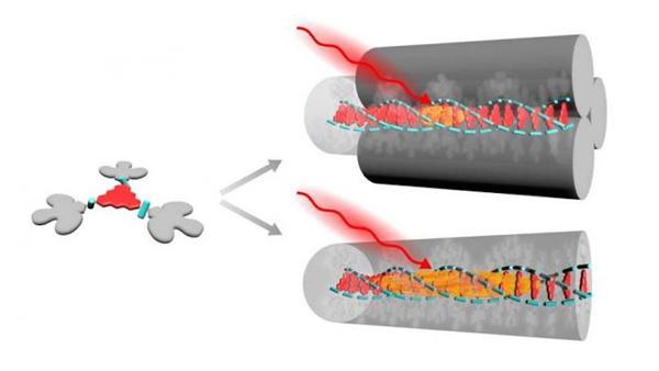 Molecular Building Block