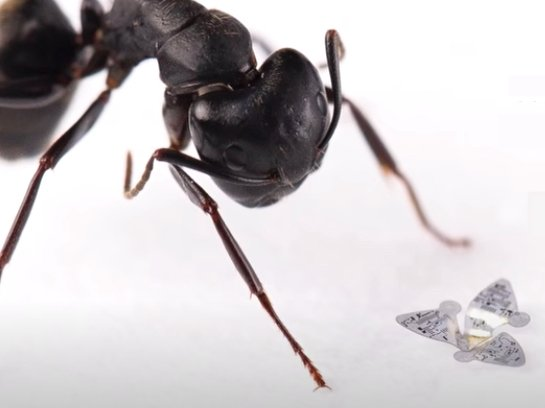 The flying microchip next to an ant for scale