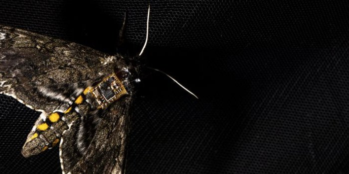 The sensor is so small that it can be carried by an insect