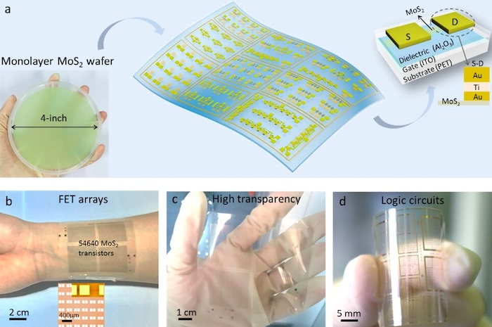 Transparent electronics prototypes using a 2D semiconductor