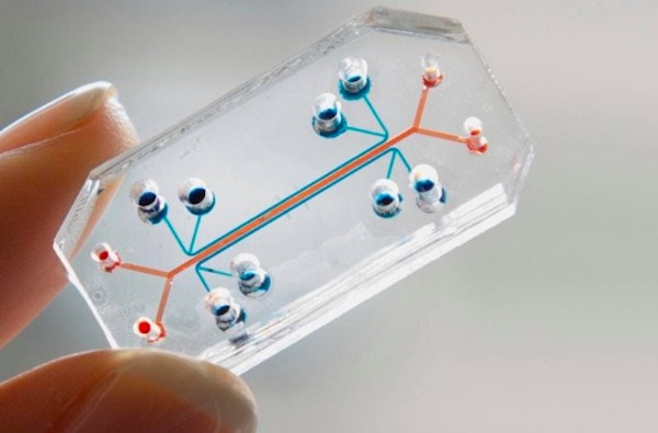 A organ-on-a-chip device developed by Wyss Institute at Harvard University.